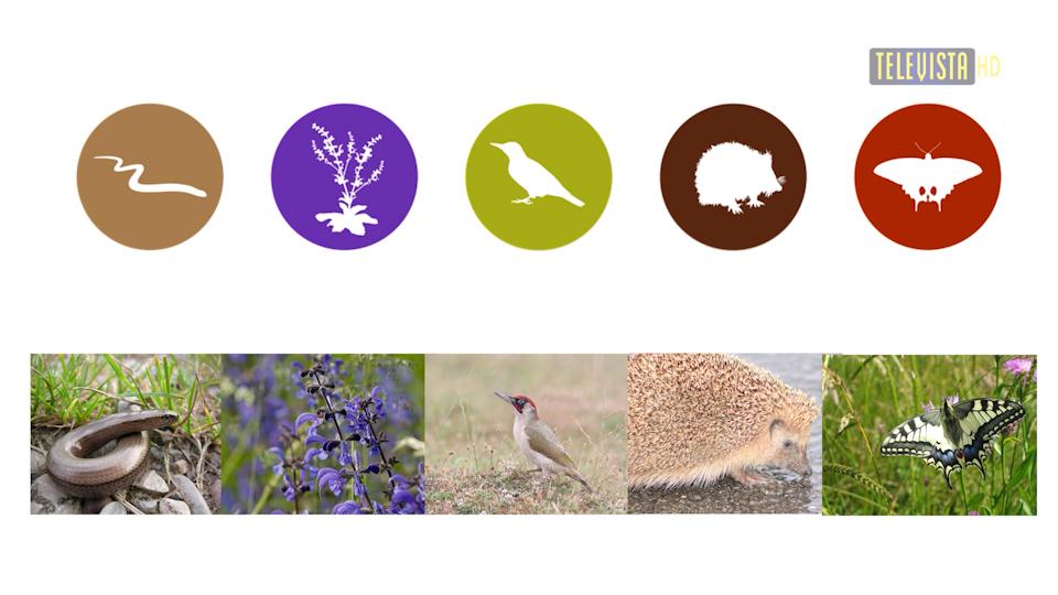Vorschaubild für Zwischenbilanz Naturfinderprojekt