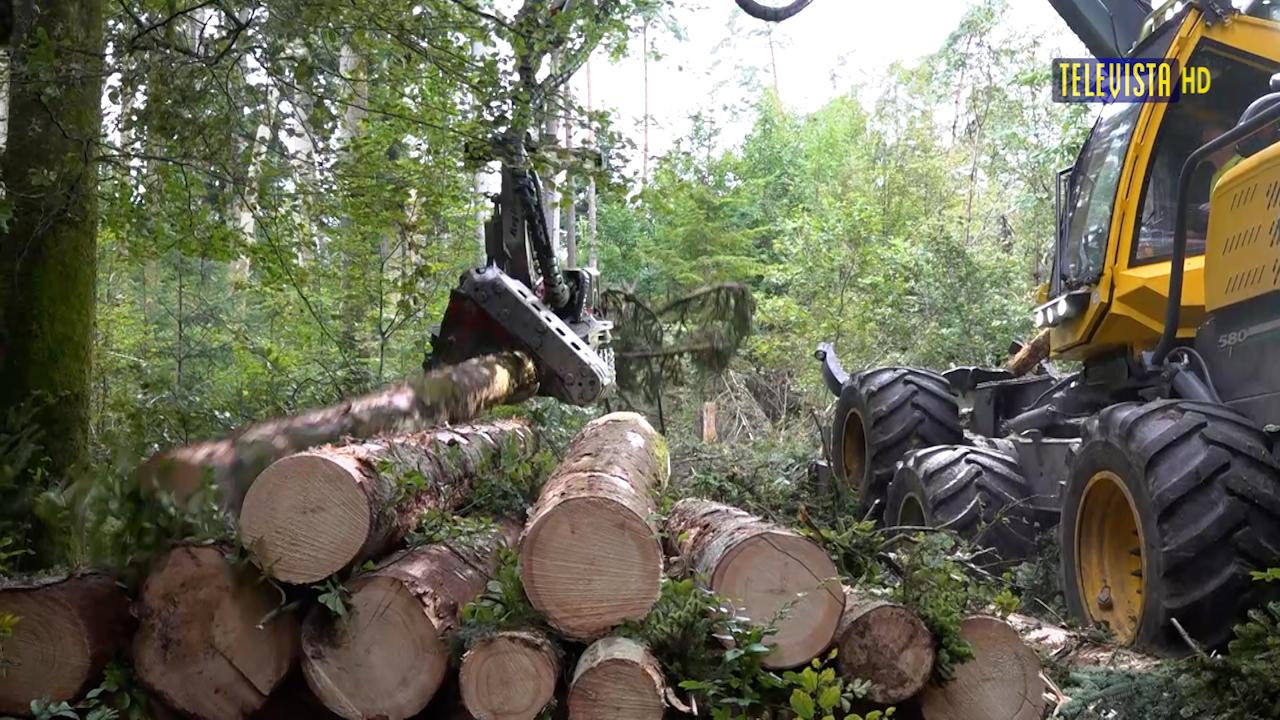 Vorschaubild für Sturmschäden Wald und Reben
