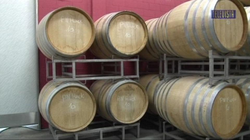 Vorschaubild für Der Walliseller Wein 2011 ein guter Jahrgang