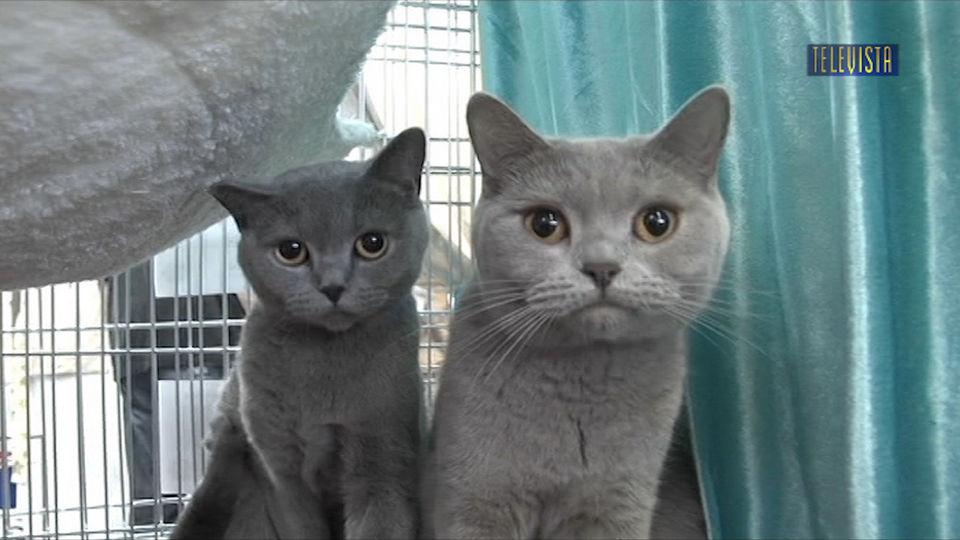 Vorschaubild für Internationale Katzenausstellung in Wallisellen