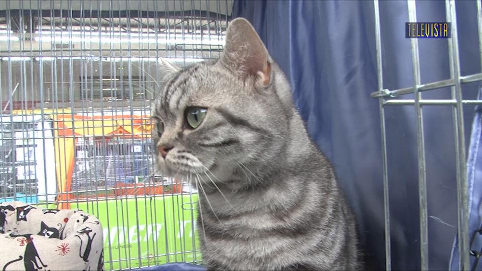 Vorschaubild für Internationale Katzenausstellung