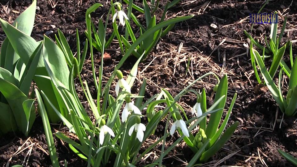 Vorschaubild für Abspann mit Frühlingsimpressionen