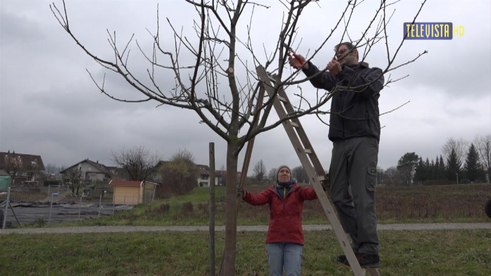Vorschaubild für Naturschutzverein – Baumpflege